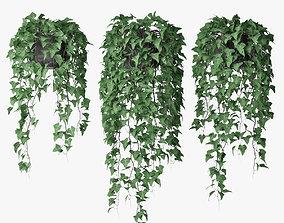 3D model nature ivy in pot 09