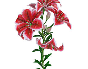 Lily pink tiger 3D