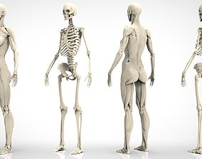 3D Female Ecorche - Digital Model spine