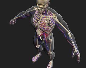 zbrush Circulatory System with Skeleton 3DSmax