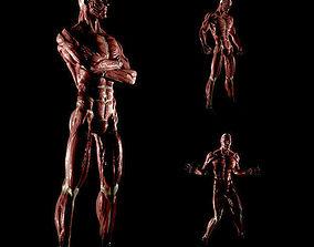 3D model Anatomy of a man