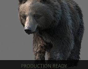 bear - fur 3D model