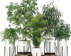 Plants collection 350 3D