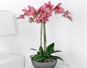 Orchid3 3D model