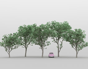 3D model Acacia Tree Pack 01