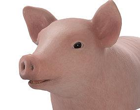 Small pig 3D model