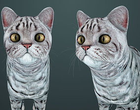 3D model Cat - British Silver Tabby - Young Kitten - 1