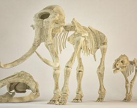 Animal sceletons 3D model