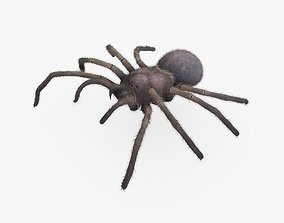 3D model Halloween Spider Rigged