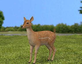 Fallow Deer Fawn 3D model