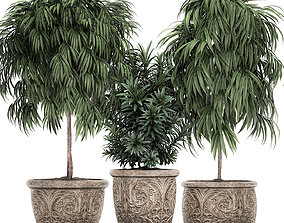 Trees in classic flowerpots for the parks and garden 3D