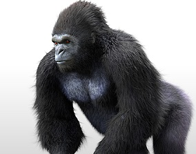Gorilla Rigged Hairs 3D model low-poly