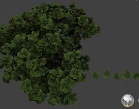 Linden leaf 3D models
