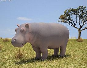 3D asset Hippopotamus Hippopotamus Amphibius