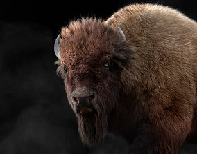 animated 3D Bison Male