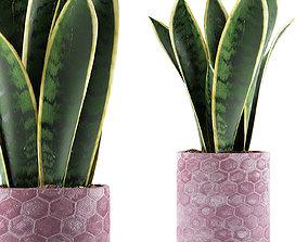 Plants Collection 98 3D model
