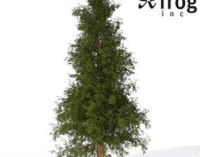 Western Red Cedar Medium 3D model