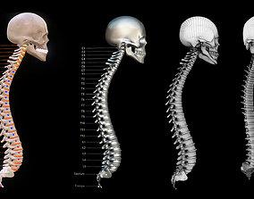 Human Vertebral Column 3D model