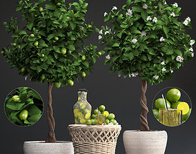Lemon Tree with Fruit 3D