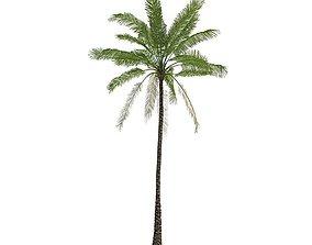 3D model Green Pam Tree