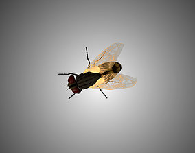 3D model Fly Low Poly Rigged