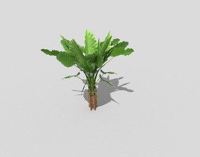 3D asset realtime Low poly Plant fern
