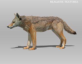 Coyote Animated 3D model realtime