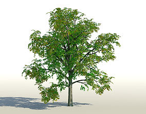 Maple Acer Tree 01 PBR 3D asset