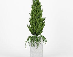 flowerbed Square Tall Planter Thuja 3D model