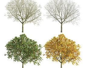Apple Tree 1 seasons 3D model