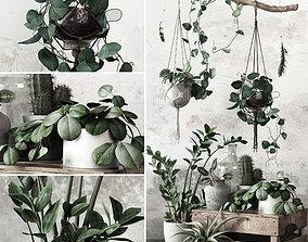 Plant Set plank 3D model