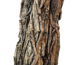 Realistic Detailed Tree Bark 3D