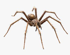 Domestic Spider - Tegenaria Domestica 3D asset animated