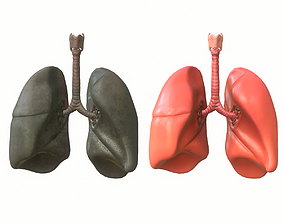 Lungs Human Smoker vs Non Smoker 3D asset