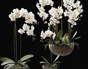 Orchid 2 3D