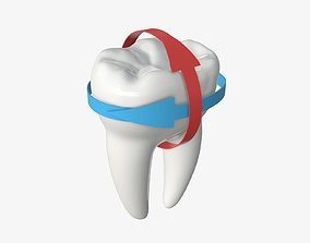 Tooth molars with arrows 01 3D model