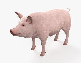 3D Pig HD
