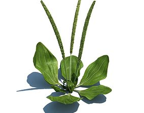 3D Green Aquatic Plant