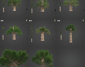 2021 PBR Baobab Collection - Adansonia Digitata 3D