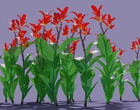 3D Plant - Beri Canna limbata