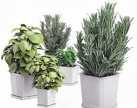 Potted kitchen plants set 3D