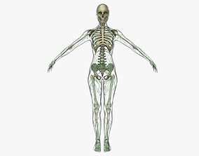 Female Lymphatic System Anatomy With Skeleton 3D