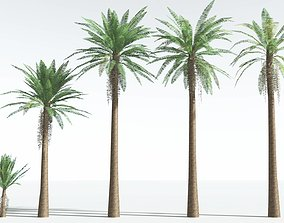 EVERYPlant Date Palm LowPoly EXT --22 Models-- 3D asset