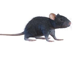 Animal Rat 3D