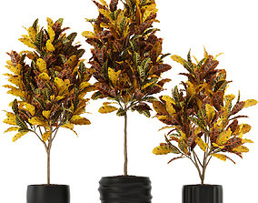3D model growfx Plants collection 120