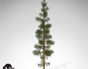 3D model XfrogPlants Subalpine Fir