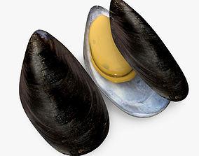 3D Mussel Shell