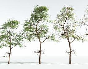 3D EVERYPlant Muira Puama EXT --24 Models--