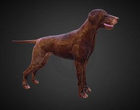 Dog Kurtshaar Brown Low Polygon Art Animal 3D asset
