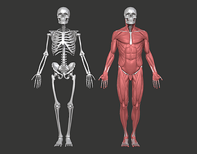 Real Anatomical Male - Skull Skeleton and Muscular 3D 1